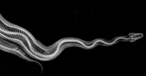 15 Fascinantes radiografías de los animales del Zoológico de Oregon