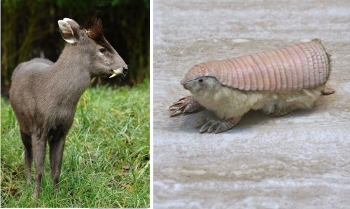 20+ Strange Animals You Didn't Know Existed