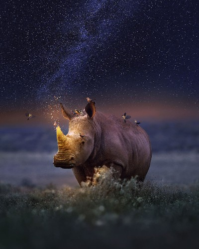 Interview: Dreamy Animal Portraits Show Species Impacted by Environmental Issues