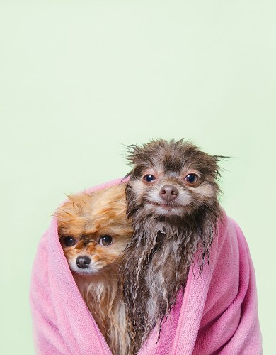 New Adorably Expressive Photos of Wet Dogs by Sophie Gamand