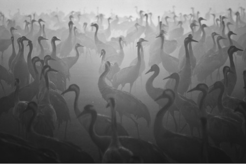 Shadows Come Alive in Stunning Black and White Scenes by Guy Cohen