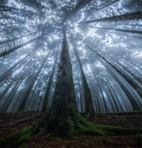 Photographer Captures Magical Beauty of Looking Up in the Middle of a Forest
