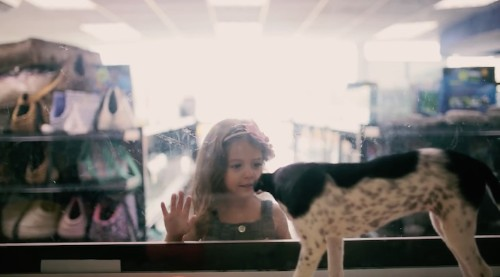 Thought-Provoking Experiment: Free Shelter Pets Are Placed in a Pet Store with a Price Tag