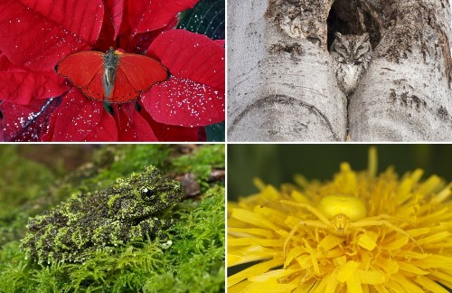 20+ Animals Who Have Perfected the Art of Camouflage
