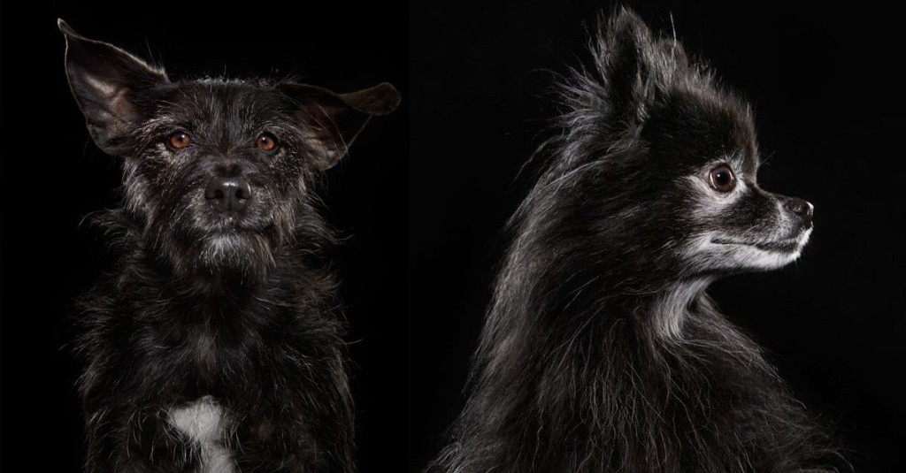 Expressive Portraits Highlight the Overlooked Beauty of Black Shelter Dogs