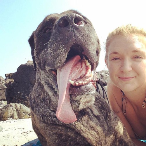 Woman Gives Her Dying Dog a Beautiful Bucket List Adventure to Say Goodbye