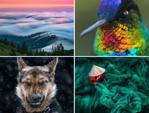 Best of 2016: Top 50 Photographs From Around the World