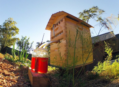 Ingenious Beehive Extracts Honey On Tap Without Disturbing Bees