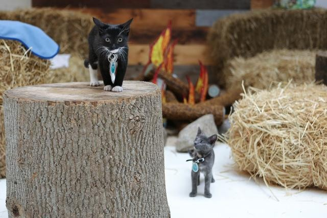 Cat Camp Pops Up in New York to Keep Your Feline Friends Healthy