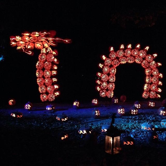Incredible Dragon and Dinosaur Sculptures Made of Pumpkins