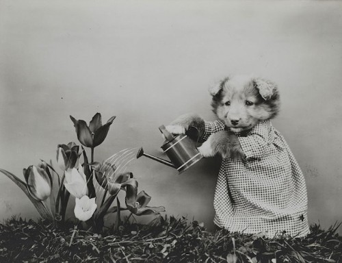 Century-Old Photographs of Adorable Cats and Dogs