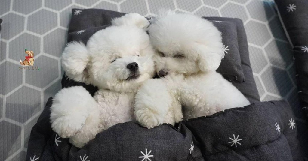 Doggie Daycare Shares Adorable Photos of Their Puppies During Naptime