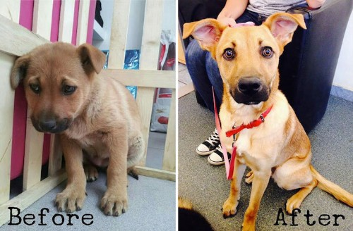 Heartwarming Before-and-After Photos Show the Difference a Day Makes in the Life of a Pet