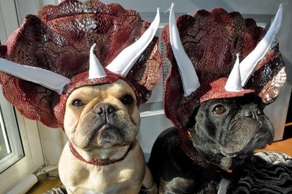 Adorable Dog Costume Turns Loveable Canines Into Menacing Triceratops