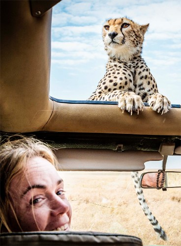 Curious Cheetah Cub Greets Safari-Goers on Serengeti