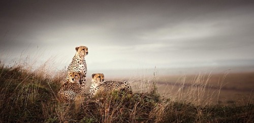 Absolutely Breathtaking African Wildlife Photography