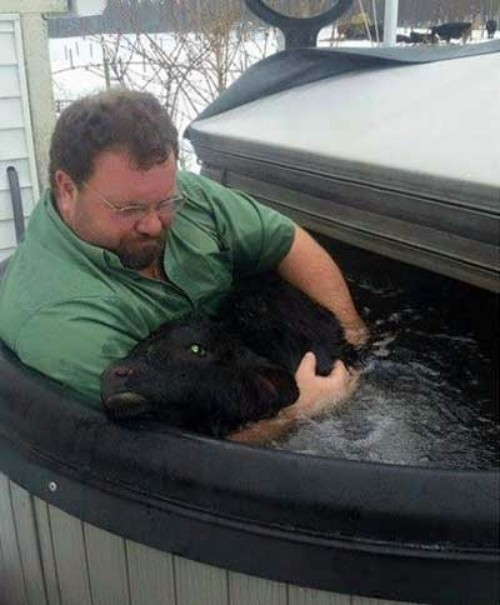 Farmer Saves Newborn Calf from Freezing to Death by Holding Him in Hot Tub