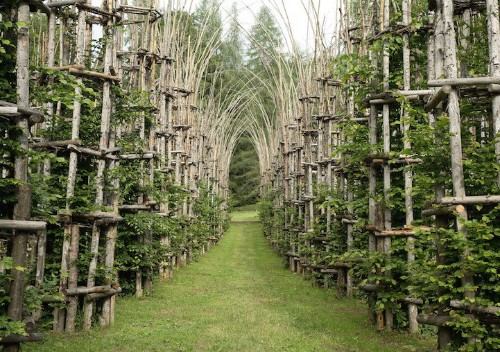 Magnificent Outdoor Cathedral Formed from Living Trees