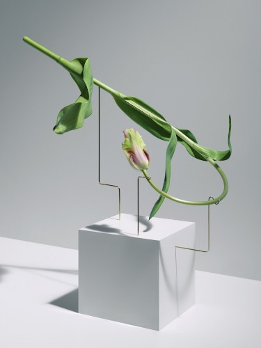 Elegant Flowers Sculpted Into Unexpected Minimalist Arrangements