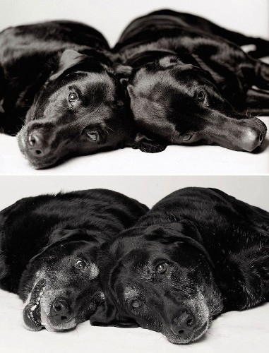 Adorable Puppies Become Wise Adult Dogs in Heartwarming Side-By-Side Portraits