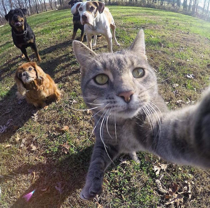 Photogenic Cat Masters the Art of Taking Purrfect Selfies