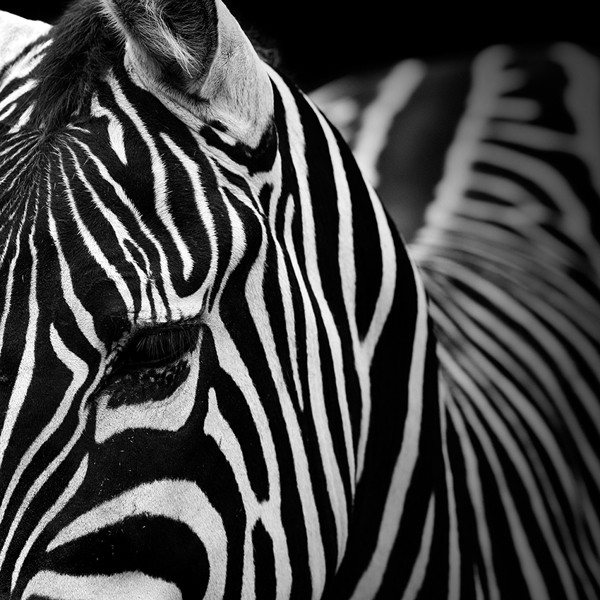 Stunning Monochromatic Portraits of Animals by Lukas Holas