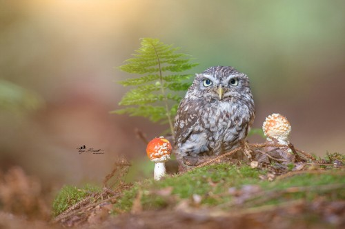 Sweet Little Pet Owl Uses Mushroom as Umbrella During Sudden Rainstorm