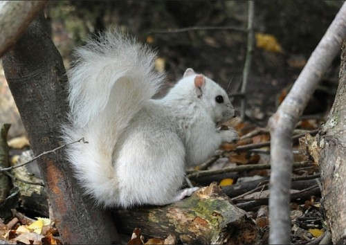 Extremely Rare White Squirrel Spotted in the Woods of England