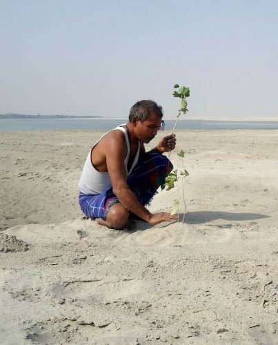 Man Spends 40 Years Planting a Tree on Barren Island Every Day