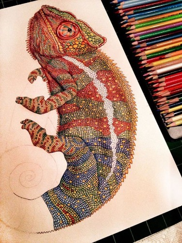 Amazingly Colorful Drawings of Reptiles by Illustrator Tim Jeffs