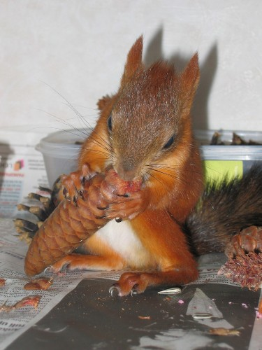 Injured Baby Squirrel Joins the Family of the People Who Rescued Him