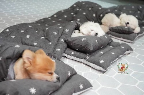 Doggy Daycare Snaps the Most Adorable Photos of Napping Puppies
