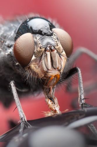 Amazingly Detailed Macro Portraits of Bugs