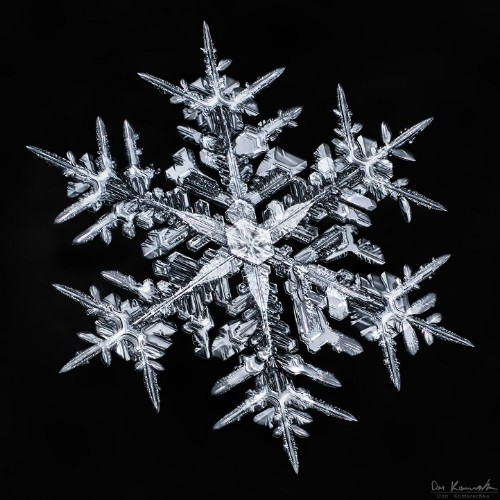 Photographer Spent 2,500 Hours Capturing Stunning Photos of Complex Snowflakes