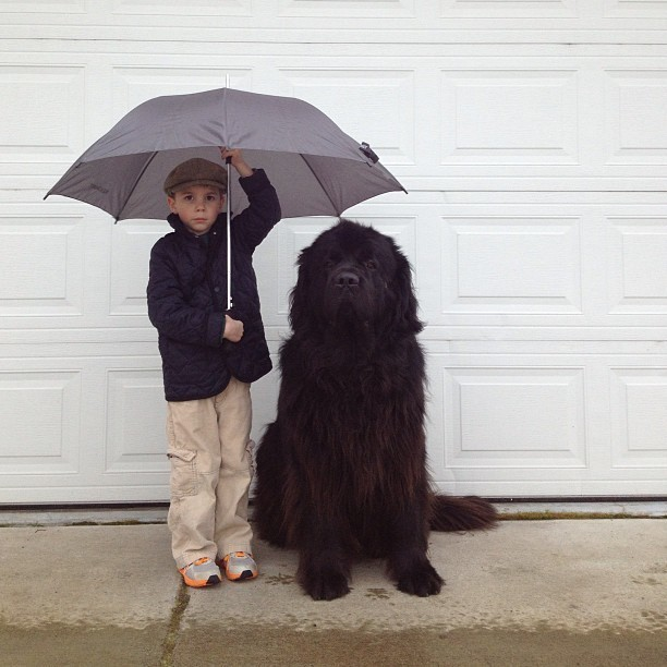 Genuine Love Between a Little Boy and His Big Dog