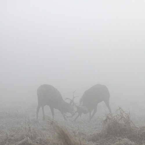 Beautiful Deer Silhouettes Set within Misty Landscapes