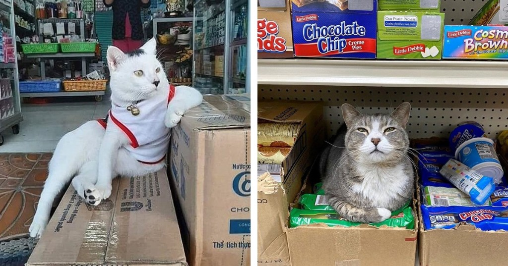 'Bodega Cats' Instagram Features Furry Friends That Think They Run These Small Stores