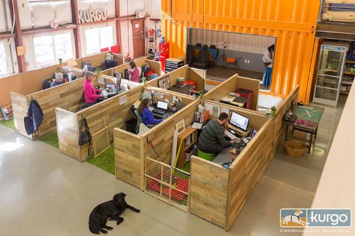 Innovative Office Is Specially Designed as the World's Most Dog-Friendly Workspace