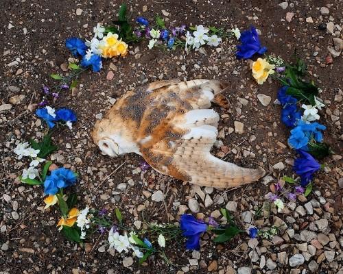 Photographer Creates Memorials Around Found Roadkill