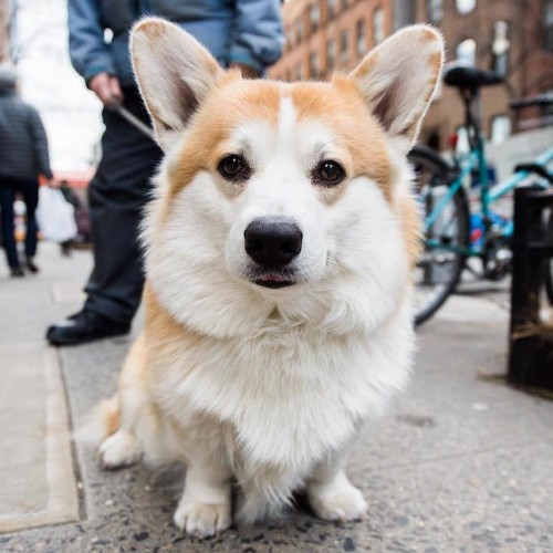 Photographer Scours NYC's Streets Looking for Dogs with Unique Personalities
