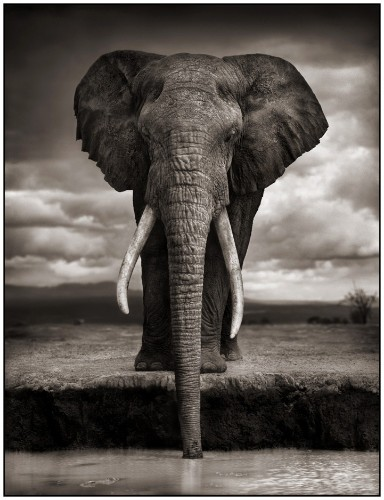 Conserving Africa's Wildlife Through Photography