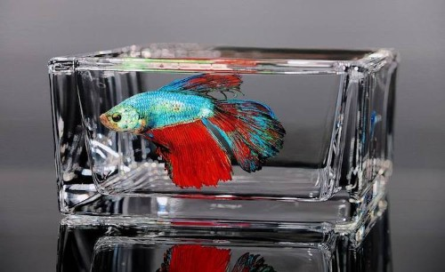 Hyperrealistic Oil Paintings of Colorful Fish Trapped in Glass Bowls