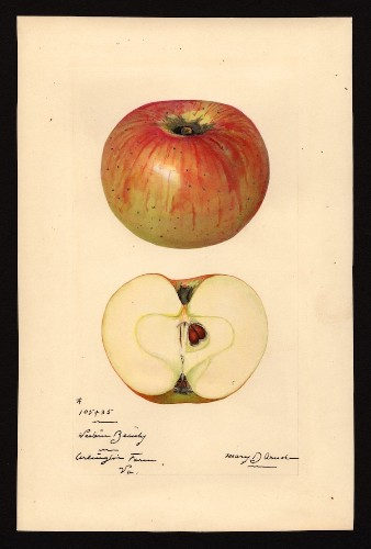 19th-Century Watercolors of Newly Discovered Fruits of the Time