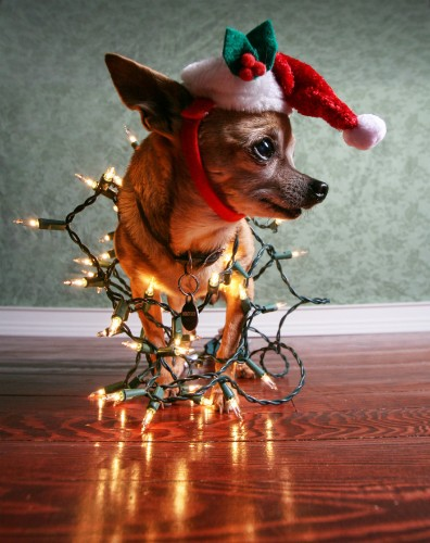 20 Adorable Animals Who Are in the Holiday Spirit