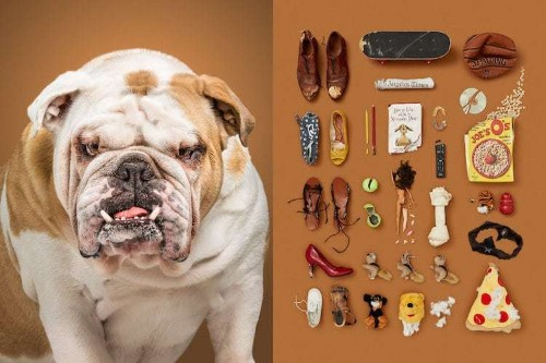 Portraits of Dogs and Lifestyle-Specific Possessions Reveal Their Personalities