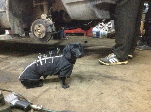 Adorable Tool-Dog is Man's Best Assistant Who Helps Humans Fix Cars
