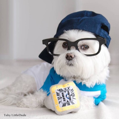 Meet Toby LittleDude, the Adorable Pup That Out-Hipsters Most Humans