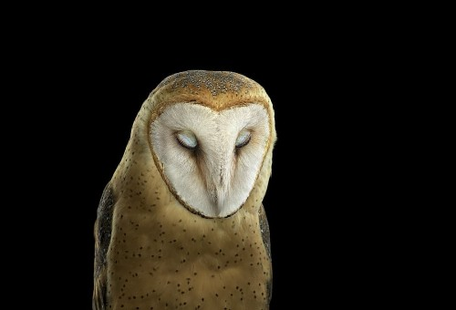 """Interview: Animal Portraits Poetically Illustrate the """"Interconnected Diversity of Life"""""""