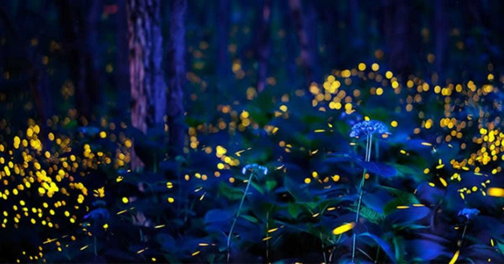 Photographer Captures Magical Sight of Fireflies Dancing in a Japanese Forest at Night