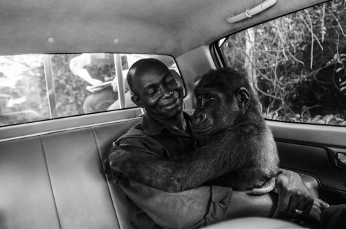 Touching Photo of Rescued Gorilla and Her Caretaker Wins 'Wildlife Photographer of the Year' Award
